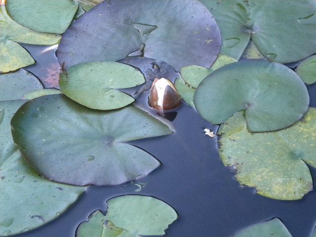 Lotusknospe als Prädiktor für Kurztherapie, therapeutische Interventionen als Kurztherapie